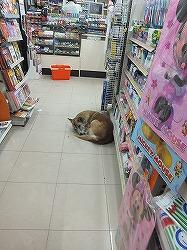 conveniencestore -dog