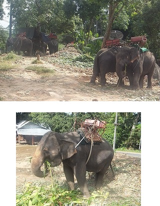 elephant-trekking