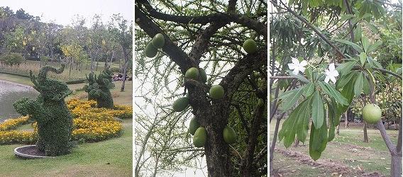 queensirikitpark-tree