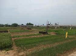 vegetable-village